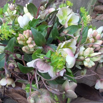Helebores bouquet by Blue Lavender Florists, London