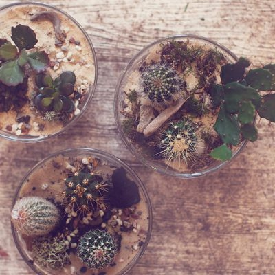Three pots of succulents by Blue Lavender London Florist